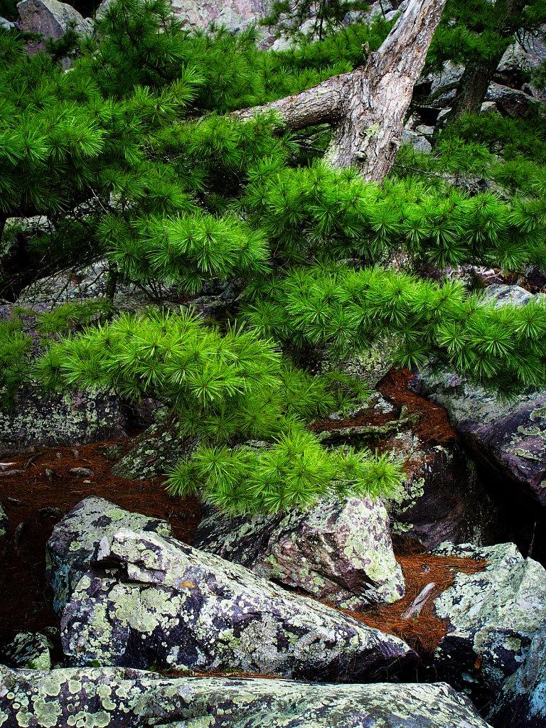 Green and Granite