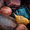 Golden Leaf and Stones, Lake Superior Provincial Park, Ontario, Canada
