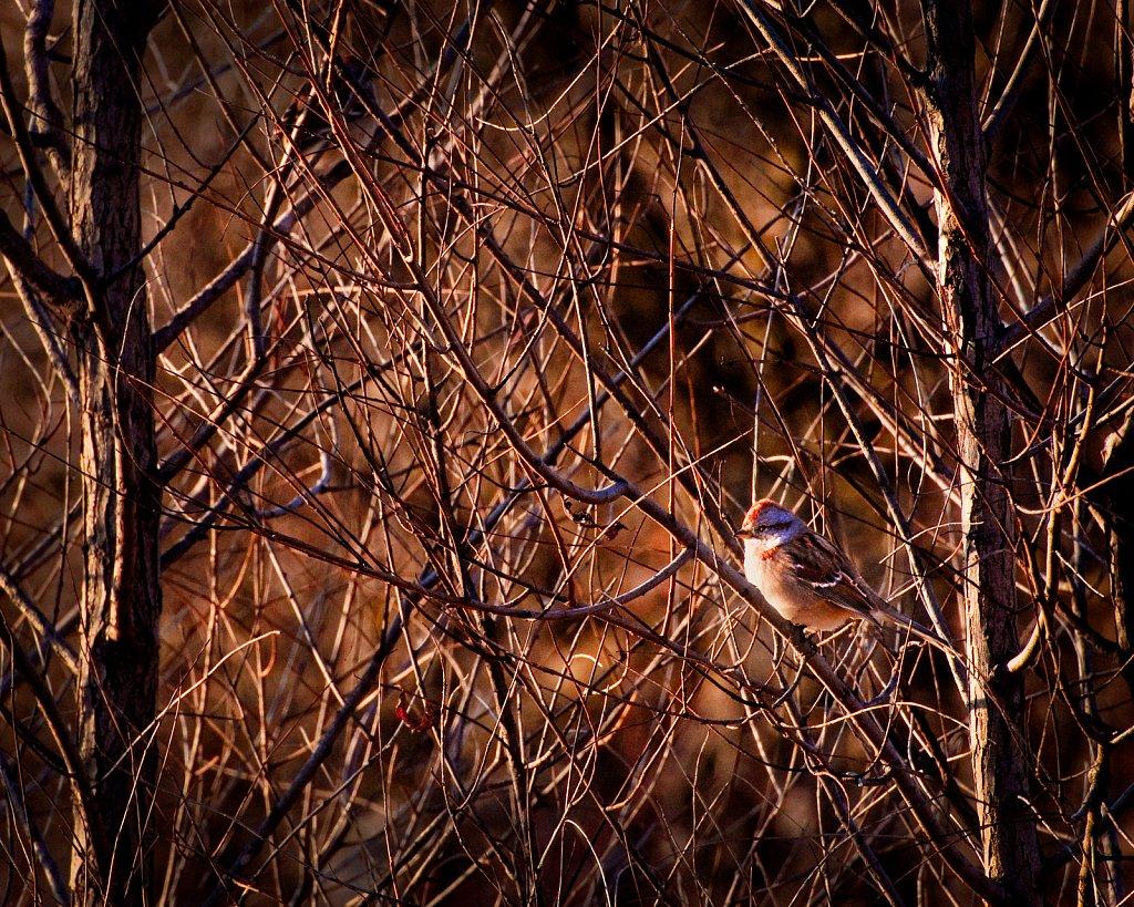 Bird in Brown, Denoon Park, Muskego, Wisconsin